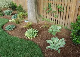 landscaping around trees landscaping plants tree edging mulch
