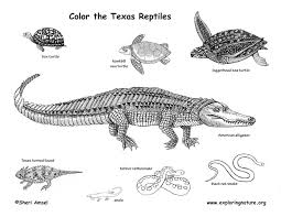 Texas Reptiles Coloring Page Reptile Coloring Pages