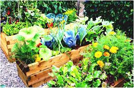 backyards wonderful backyard vegetable garden design courses the