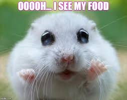 Cute Meme - hamster cute latest memes imgflip