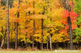 willie mchale photography michigan fall color