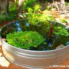 21 best frog pond ideas images on pinterest pond ideas garden