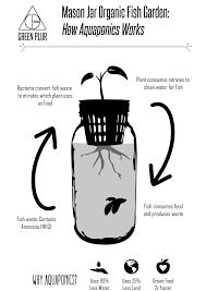 how aquaponics works example with mason jar aquaponics grow your