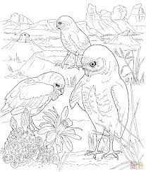 three owls coloring page free printable coloring pages