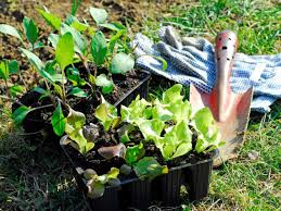 know when to start your garden diy network blog made remade diy