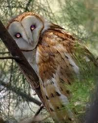 The Owl Barn Gift Collection Https I Pinimg Com 236x De 8a 2e De8a2e28c610afd