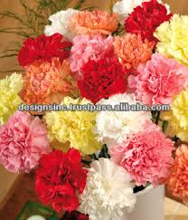 Wholesale Fresh Flowers Export Carnation Wholesale Fresh Cut Flowers Buy Decorative
