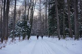 free photo way spacer forest tree winter snowy tree snow max pixel
