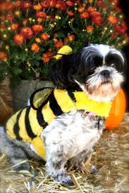 human dog costumes for halloween 15 best goodwill halloween costume ideas images on pinterest