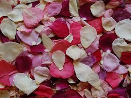 real petals real flower petals for wedding petals petal confetti