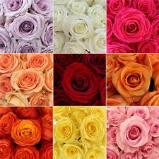 wholesale roses bulk roses 200 stems your colors