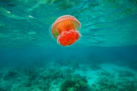 online get cheap sea life prints aliexpress com alibaba group