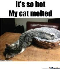 Melting Meme - melted cat by lillyray meme center