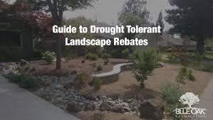 guide to drought tolerant landscape rebates chico landscapes
