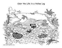 habitats biomes u2013 coloring nature