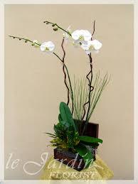 orchid flower arrangements orchid plant arrangements palm gardens 561 627 8118