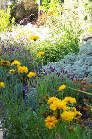 native plants san diego san diego landscaping resources letz design