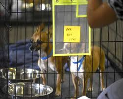 pets news tips u0026 guides glamour acs taking care of cats dogs as evacuees focus on survival