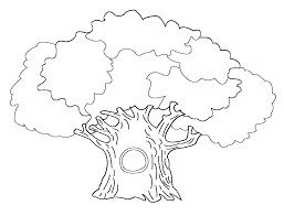 outline of a tree without leaves coloring page free download