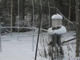 great backyard bird count february 15 18