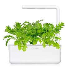 leaf mustard grow fresh food at home smart garden u2013 click u0026 grow