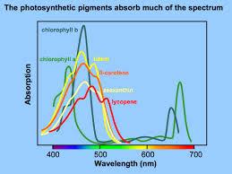 Blue Light Wavelength Light