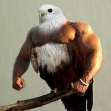 Meme Bird - birds with arms know your meme