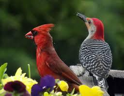 Ohio birds images Ohio birding by season fall bird watcher 39 s digest jpg