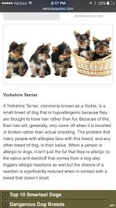 Do Cockapoo Dogs Shed A Lot by Best 25 Non Shedding Dogs Ideas On Pinterest Non Shedding Cats