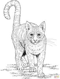 ocelot coloring page ocelot and butterfly coloring page free