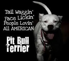 american pitbull terrier z hter deutschland 86 best david images on pinterest