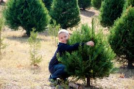 yuletide christmas tree farm is a place to make christmas memories