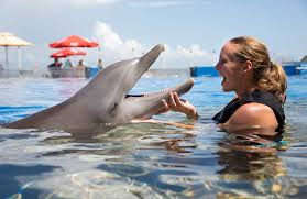 Florida wild swimming images Florida travel swim with dolphins in florida jpg