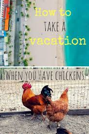 how do you take a vacation when you have chickens homesteads
