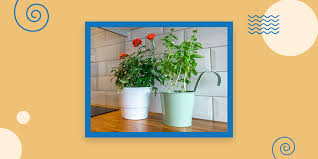 top of kitchen cabinet greenery how to decorate top of kitchen cabinets 10 tips collage