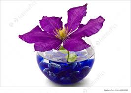 Decorative Flowers by Decorative Flowers In Glass Vase Picture