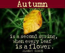 Autumn Memes - points of light happy autumn