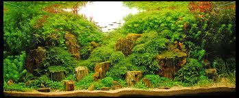 Aquascape Inspiration Planted Aquarium Inspiration For A Fresh Year Imod