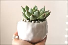 succulent planter ceramic pinch pot succulent planter white pinched pot planter