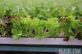 little leaf farms a little bit about a lot of things a little