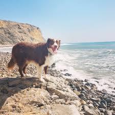 j bar w australian shepherd ocean trails 52 photos u0026 12 reviews hiking 1 oceanaire dr
