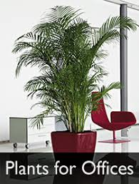 Plants For Office Sick Building Syndrome How Plants Can Help House Of Plants