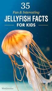 best 25 jellyfish facts for kids ideas on pinterest