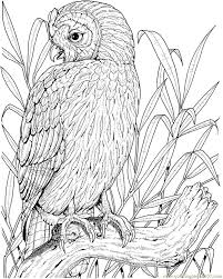 160 best bird coloring images on pinterest coloring books