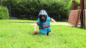 halloween football costumes sookie goes in for the sack and is denied by ivy youtube