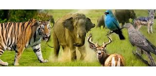 Louisiana wildlife tours images Wildlife tour wildlife tour packages best wildlife tour jpg
