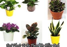 Desk Plant Enchanting 20 Plants For Office Cubicle Decorating Inspiration Of