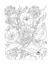 complex flower coloring pages kids coloring