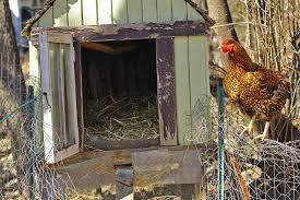 Chicken Coop Floor Options by Plan And Build Your Small Farm Chicken Coop