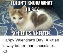 Happy Kitten Meme - idion t know what to say so heres a kitten happy valentine s day a